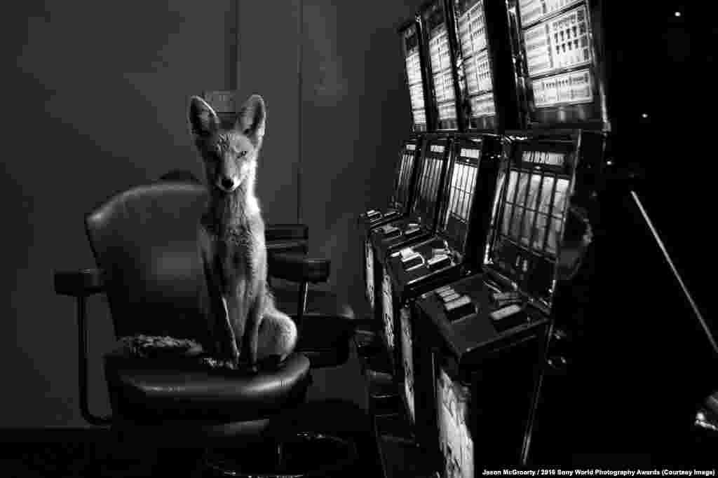 Photographer Jason McGroarty of Ireland: Totem Fox I wanted to capture the heart-stopping moment when the wild breaches the barriers of the city and reminds us that the line between humans and wildlife is not as clearcut as we would like to believe, and that in the animal kingdom, the only thing we can count on is unpredictability, that the unexpected should be expected.