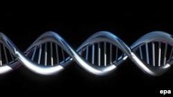 ДНК важнее человека