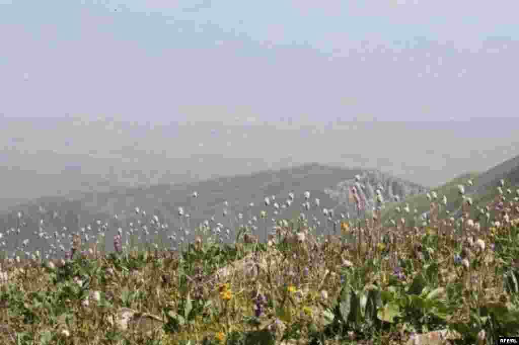 Саймалуу-Таш или расшитые камни Тянь-Шаня #15