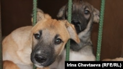 Opponents say that dogs in the Moscow municipal authority's new canine asylum will be kept in dangerous, overcrowded conditions.