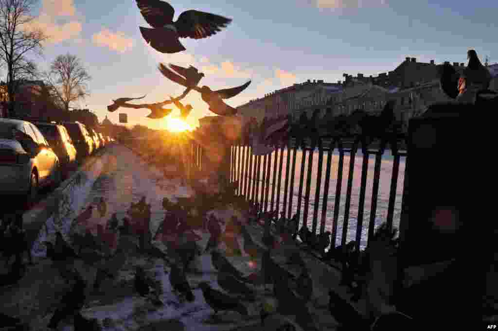 Pigeons rest on an embankment of the Fontanka River in St. Petersburg. (AFP/Olga Maltseva)