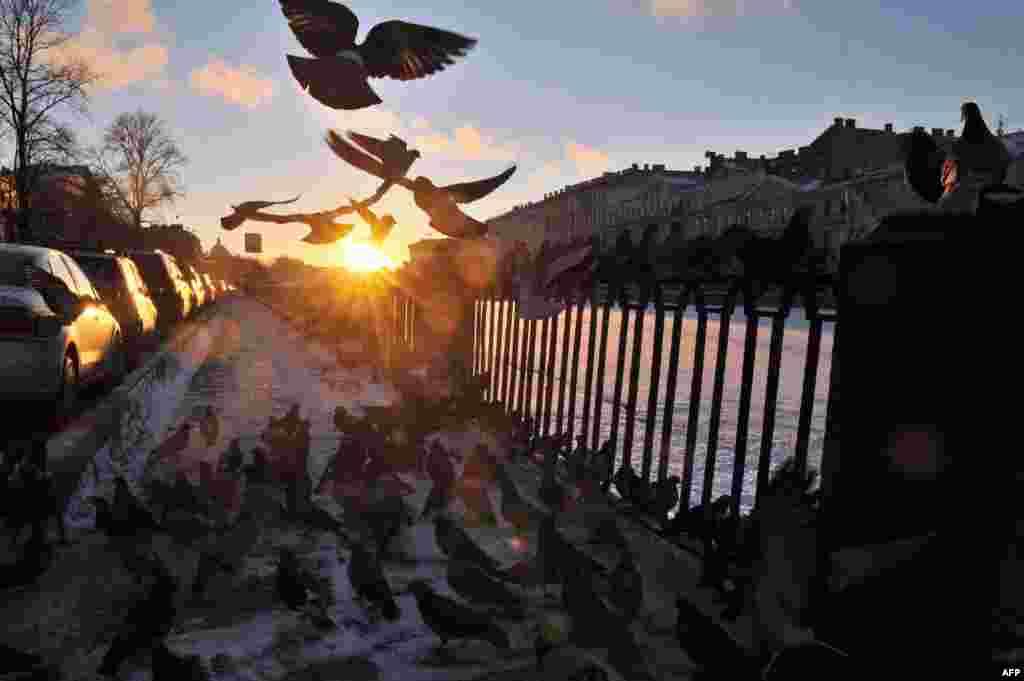 Pigeons rest on an embankment of the Fontanka River in St. Petersburg. (AFP/Olga Maltseva)
