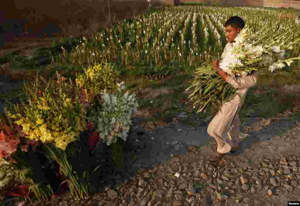 Hassan, a farmer, carries a bunch of flowers in the field to be sold in local markets in Lahore, Pakistan. (Reuters/Mohsin Raza)