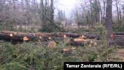 მოჭრილი ხეები სოფელ ვედიდკარში