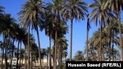 في احد بساتين بغداد