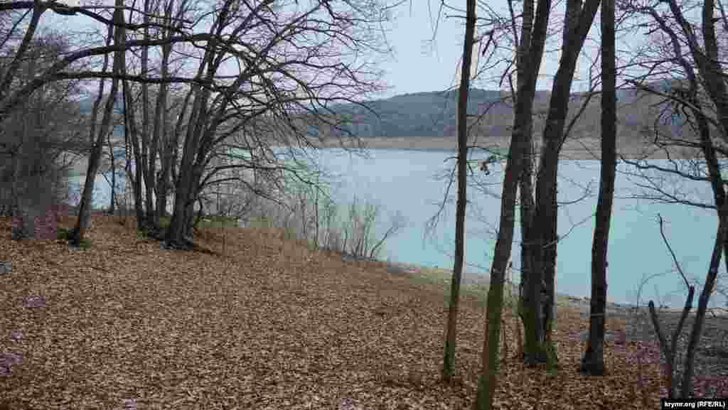 Водохранилище обрамляют леса