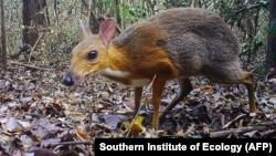 Southern Institute of Ecology (AFP)