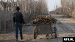 Қыстың суық күні көшеден тезек теріп жүрген тұрғын. Хорезм, желтоқсан 2008 жыл (көрнекі сурет)