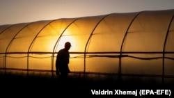 Një fermer në fshatin Mamushë. 12 maj, 2020.