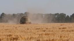 A combine harvester gathers barley in a field near the Ukrainian village of Zhovtneve.(file photo)