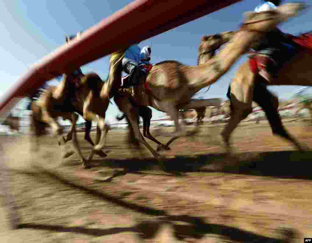 Jockeys compete in a traditional camel race during the Sheikh Sultan Bin Zayed al-Nahyan Camel Festival, held at the Shweihan racecourse, in the outskirts of Abu Dhabi. (AFP/Karim Sahib)
