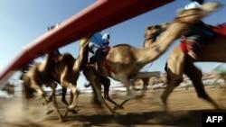 ارشیف، متحده عربي اماراتو کې د اوښ ځغلولو سیالۍ