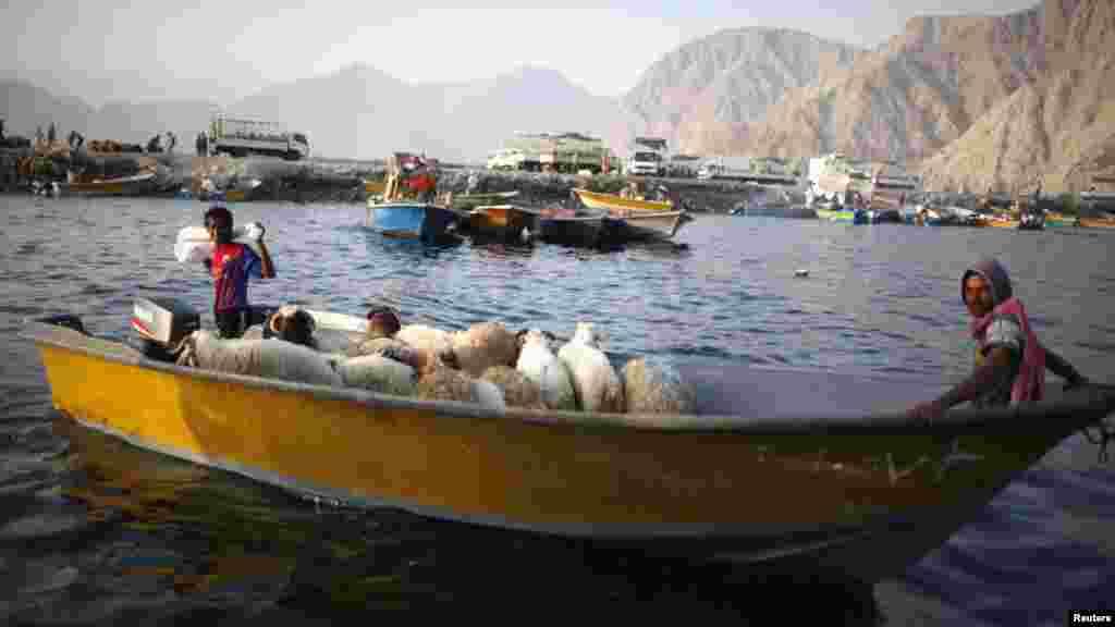 Oman -- Iranian smugglers drive a boat loaded with sheep at the port of Khasab, 26Sep2012