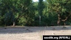 Территория в махалле «Ахмед Югнаки», на которой была осуществлена незаконная вырубка деревьев.