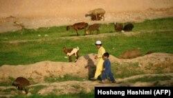 Əfqanıstanın Herat vilayəti