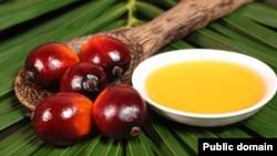 Рекламное фото. Плоды масличной пальмы и пальмовое масло