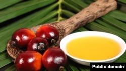 Равғани палма