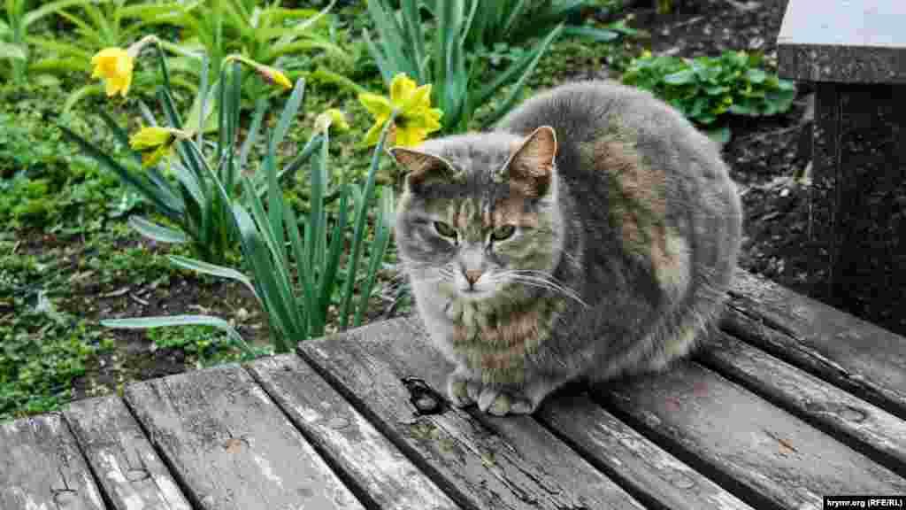 Цей суворий кіт живе в Коктебелі