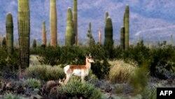 قانون گونههای در حال انقراض در حال حاضر بیش از هزار و ۶۰۰ گونه گیاهی و جانوری را در آمریکا تحت حفاظت خود دارد.