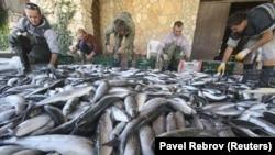 В республике малые рыбные хозяйства жалуются, что не хватает работников