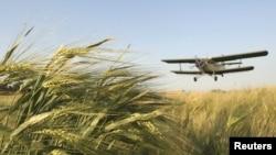 В этом году России не грозит дефицит зерна