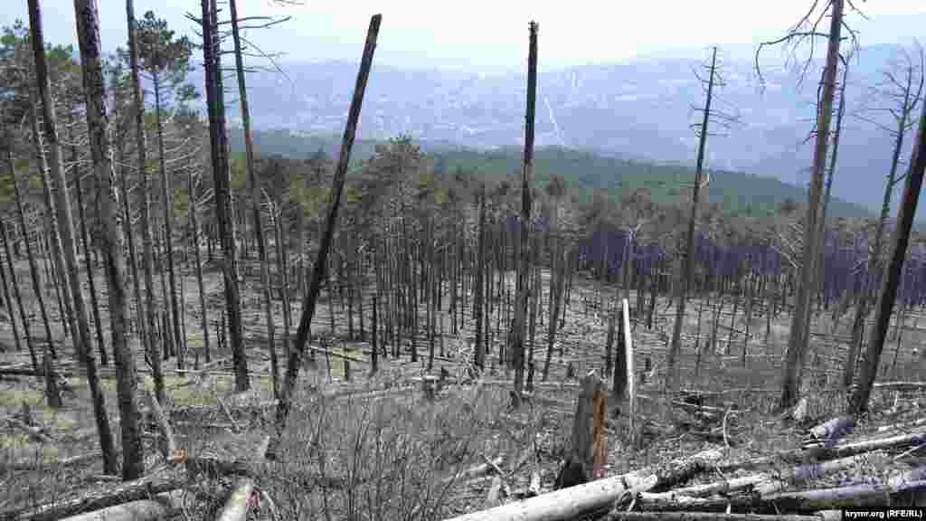 Вигляд на Ялту крізь стовбури обгорілих дерев