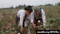 Девочки на сборе хлопка в Ташкентской области.