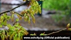 Парк в Оше во время дождя. Иллюстративное фото.