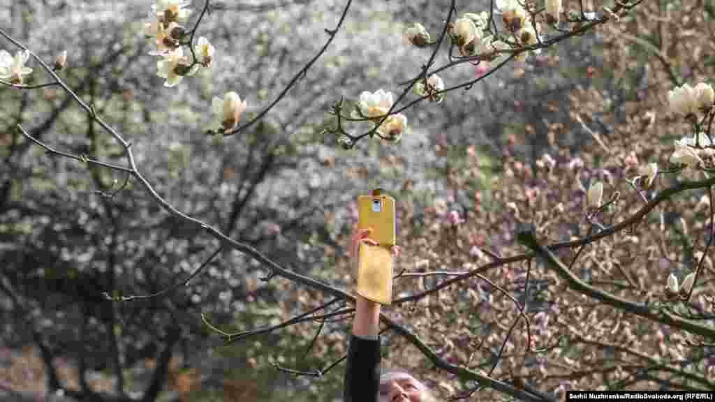 Дівчина фотографує магнолії в ботанічному саду імені Фоміна. Київ, 7 квітня 2020 року