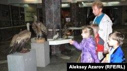 """Выставка """"Животный мир Казахстана"""" в Центральном государственном музее. Алматы, май 2012 года."""
