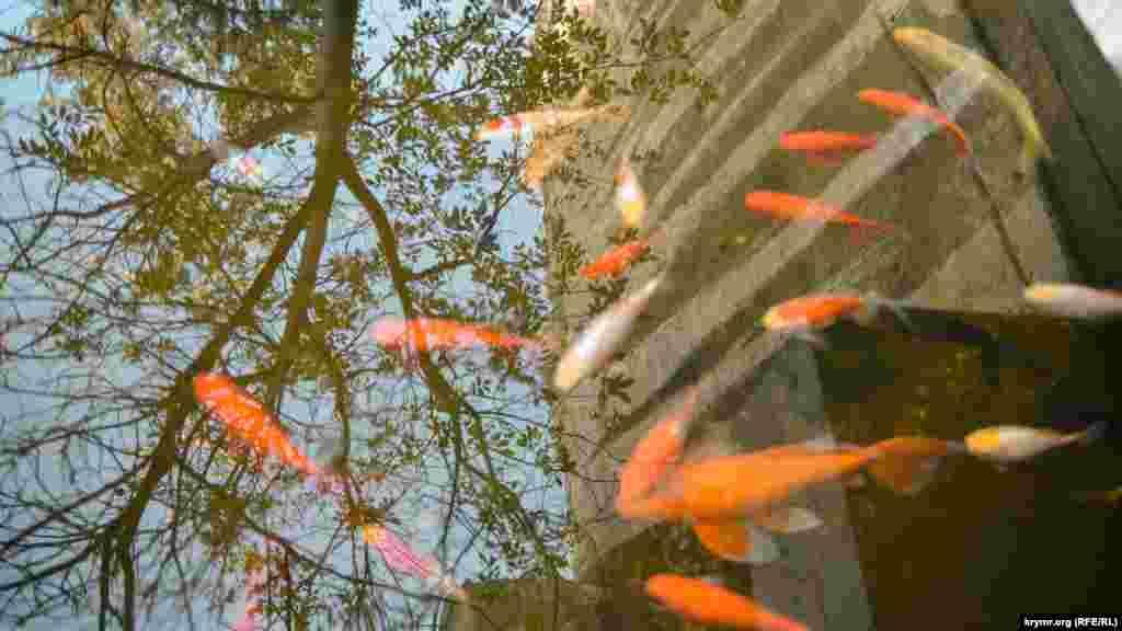 В монастырском пруду плавают красные рыбы и отражается дерево