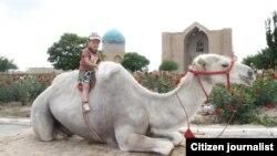 Мальчик верхом на верблюде. Казахстан.