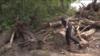 Частково знищена захисна зелена зона під Києвом