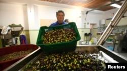 Proizvodnja maslinovog ulja, ilustrativna fotografija