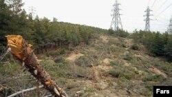 Экологи призывают отказаться от продуктов, при производстве которых был нанесен ущерб природе