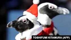 پنگوئنها در لباس بابا نوئل مشغول قدم زدن در خیابانهای یوکوهاما در ژاپن