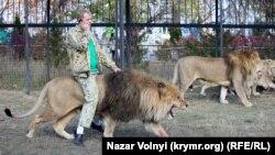Как в Крыму львам живется (фотогалерея)