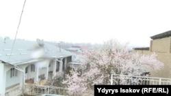 Акбаржон Жалиловтің ата-анасының үйі. Қырғызстан, Ош облысы, 3 сәуір 2017 жыл.