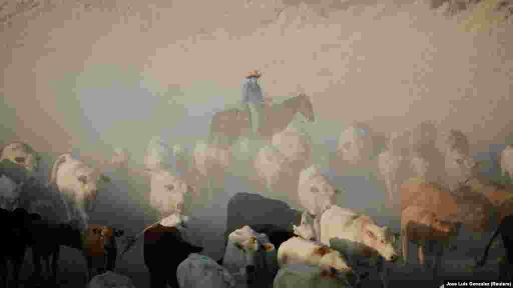 Мехиконың Джуарез аңғарында шаңдатып ірі-қара айдап бара жатқан малшы.