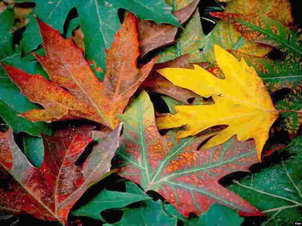 پادشاه فصلها پاییز - باغ بی برگی که میگوید که زیبا نیست... ساز او باران ... سرودش باد... پادشاه فصل ها پاییز… م. امید
