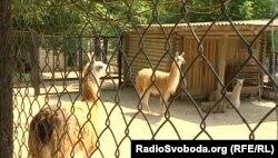 Докучаєвський зоопарк