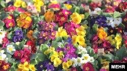 Թեհրանի ծաղկի շուկան Նովրուզի օրերին: