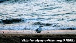 Крим, Піщане. Ілюстративне фото