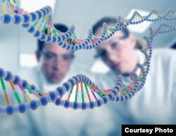 Пример того, как внутриклеточные структуры могут выступать в роли крохотных компьютеров, хорошо известен - молекула ДНК