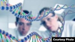 ДНКнын үлгүсү.