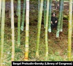 A worker poses in a grove of bamboo trees near Batumi. With its balmy, subtropical climate, various exotic crops could be grown along the Black Sea coast that would not survive elsewhere in the Russian Empire. Bamboo was used largely to make furniture.