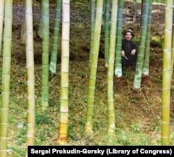 Egy munkás pózol a Batumi közelében lévő bambuszültetvényen. A Fekete-tenger partján számos olyan egzotikus növényt is lehetett termeszteni a szubtrópusi éghajlat miatt, ami az Orosz Birodalomban sehol máshol nem termett. A bambuszból javarészt bútorok készültek.