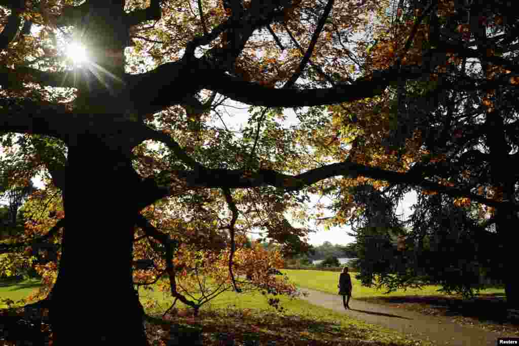 A woman walks near trees with leaves in autumn colours at Kew Gardens in west London on October 27. (Reuters/Luke MacGregor)