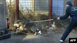 Заловување бездомни кучиња во Букурешт.