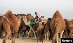 Disa deve në Irak.